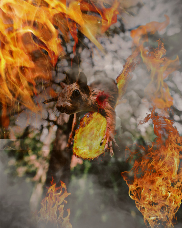 #freetoedit #fireplace #fire #forestfires #squirrel  attention to our environment,we need no forest fire,cause it hurts our friends so much